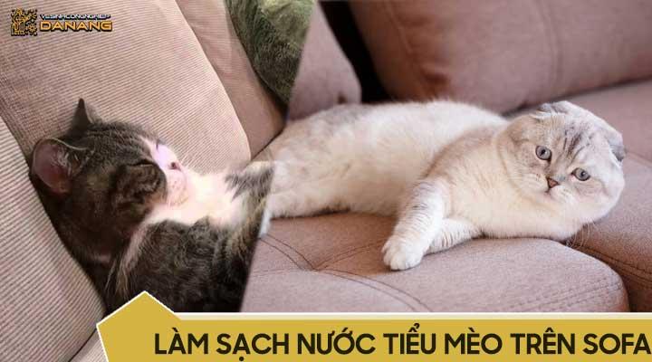 Khử mùi hôi nước tiểu mèo trên ghế sofa