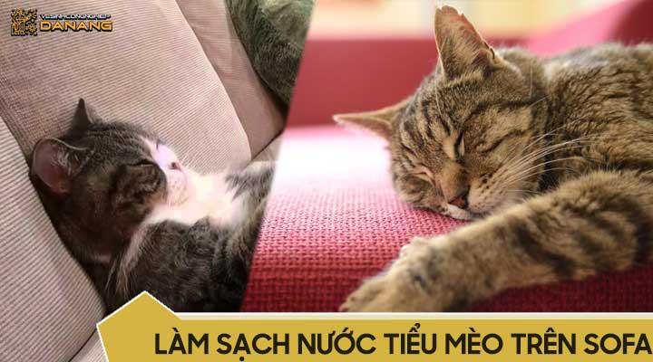 Làm sạch nước tiểu mèo trên ghế sofa